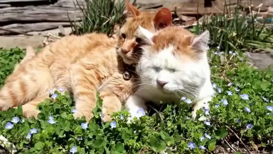 猫咪:这橘猫太烦人了, 晒太阳也要来凑热闹!