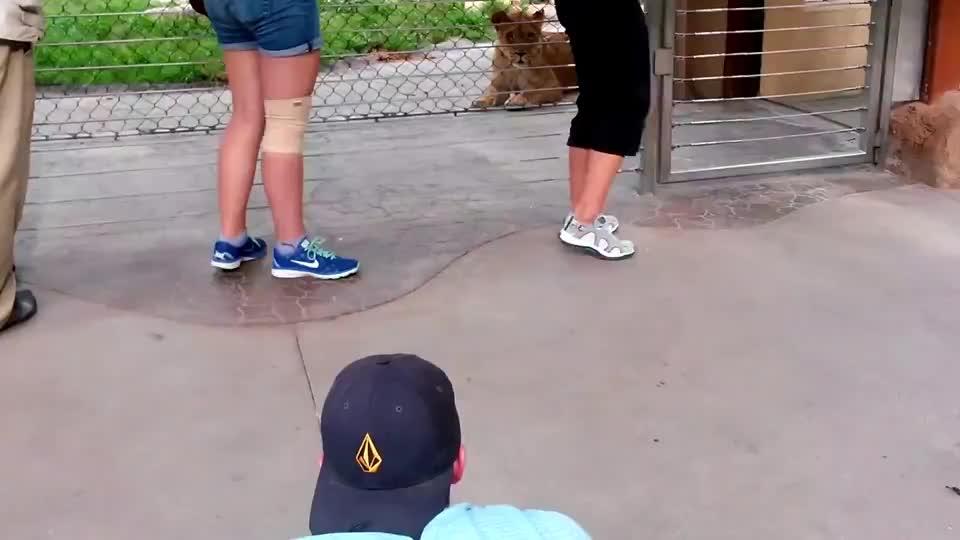搞笑!大兄弟你这是在逗狮子,还是被狮子给逗了?