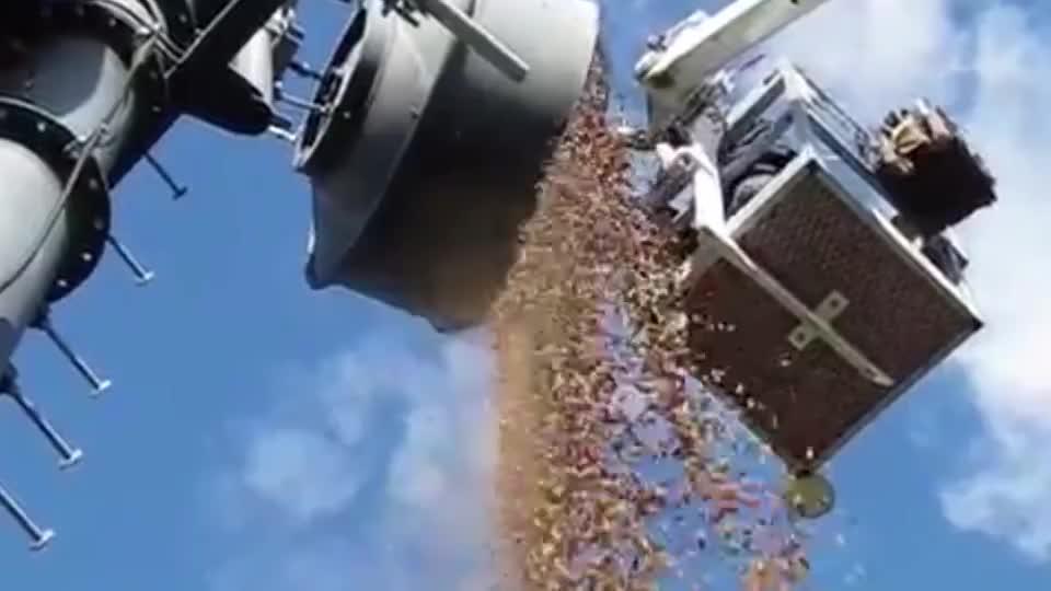 人们清理信号塔时,发现里面藏满了坚果,数量多得惊人!