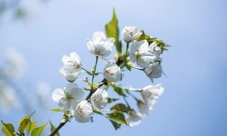 凯琦森家具:春回大地,嫩柳新芽