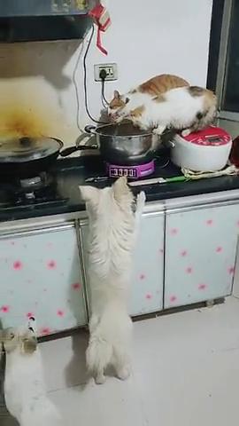 猫一叼出来骨头狗盯着抢好几块了狗崽们追狗妈妈!