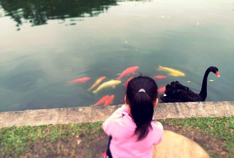 今天介绍广东四大名园之一:东莞可园