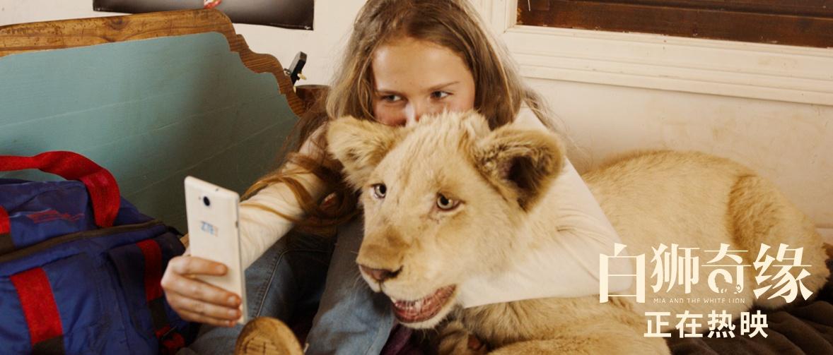 《白狮奇缘》暖愈人心好评不断,合家观影爱与陪伴不可辜负