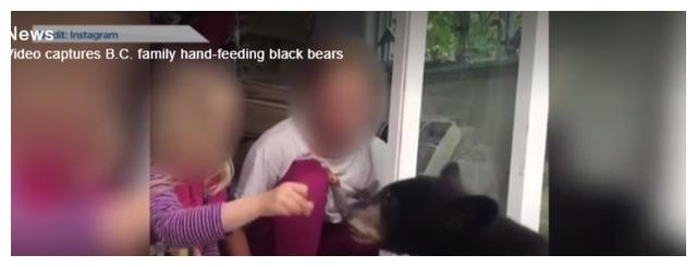 加拿大一家人与黑熊亲密接触 黑熊学会了敲门讨事物