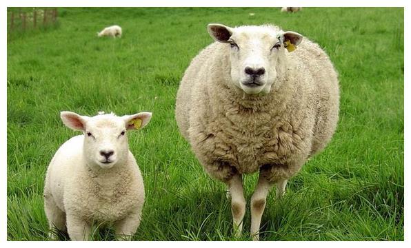 生于农历以下3个月份的肖羊人,一生运势最好,最易发家致富!