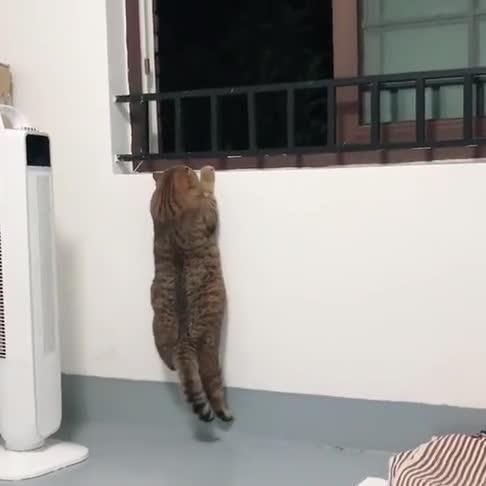 猫咪减肥第七天,看猫咪的运动量,什么时候才能完成目标