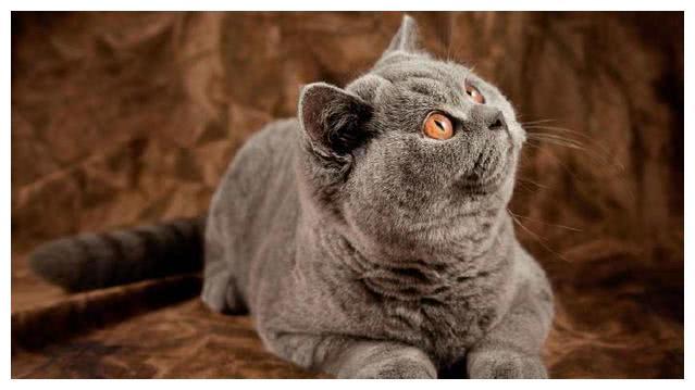 塔罗占卜:凭直觉选择一只你想养的猫,测你和前任有没有复合可能