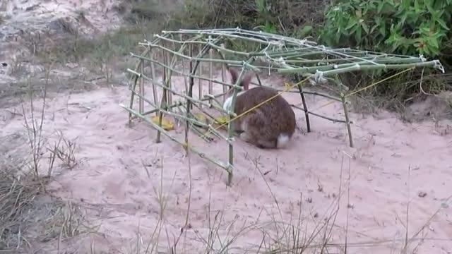 农村小伙深山里捕猎,意外发现罕见大野兔藏身的窝,这下子赚翻了