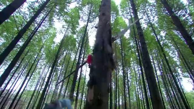 岳飞长枪捅在树干,杨再兴长矛直刺岳飞要害,却扔掉长矛认输!