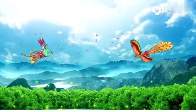 高清近拍虎纹斑鸠,真漂亮,大自然的各种鸟叫声也很好听
