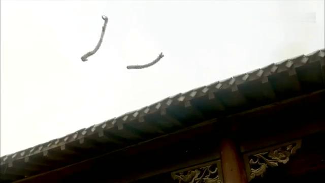 大刀记:日本武士院内切磋,不料惨遭墙外偷袭,真是太精彩了!