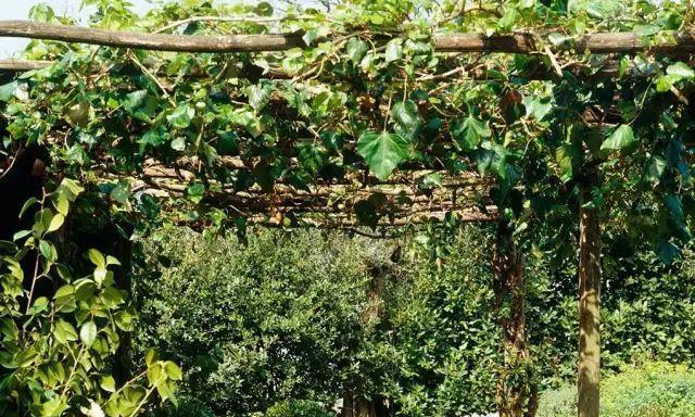 有一个庭院藤架,喝茶乘凉