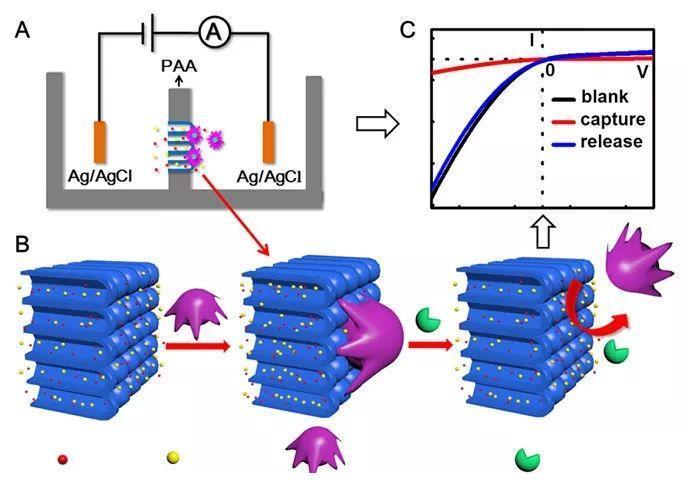 高效捕获和灵敏检测循环肿瘤细胞的纳流控新方法