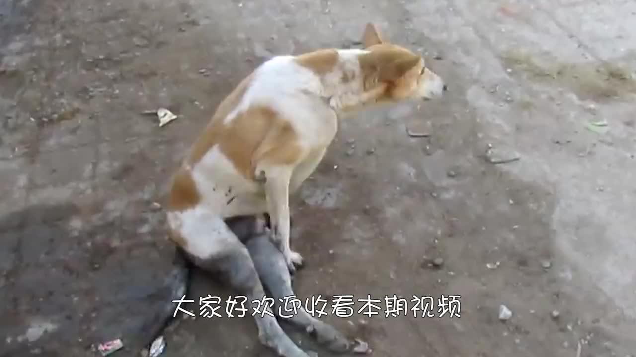 流浪狗被人全身倒满胶水,眼睛都睁不开,简直太过分了!