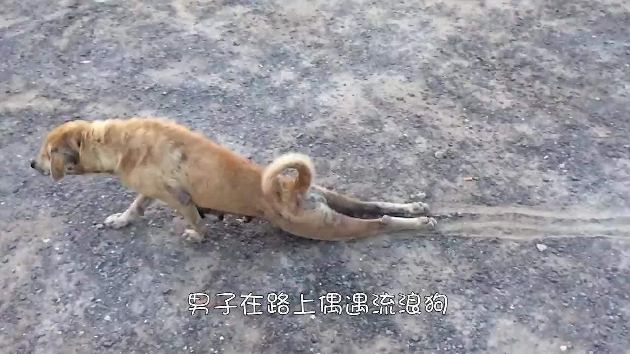 流浪狗头戴塑料管多年,人们帮助它取下后,却发现意外惊喜!