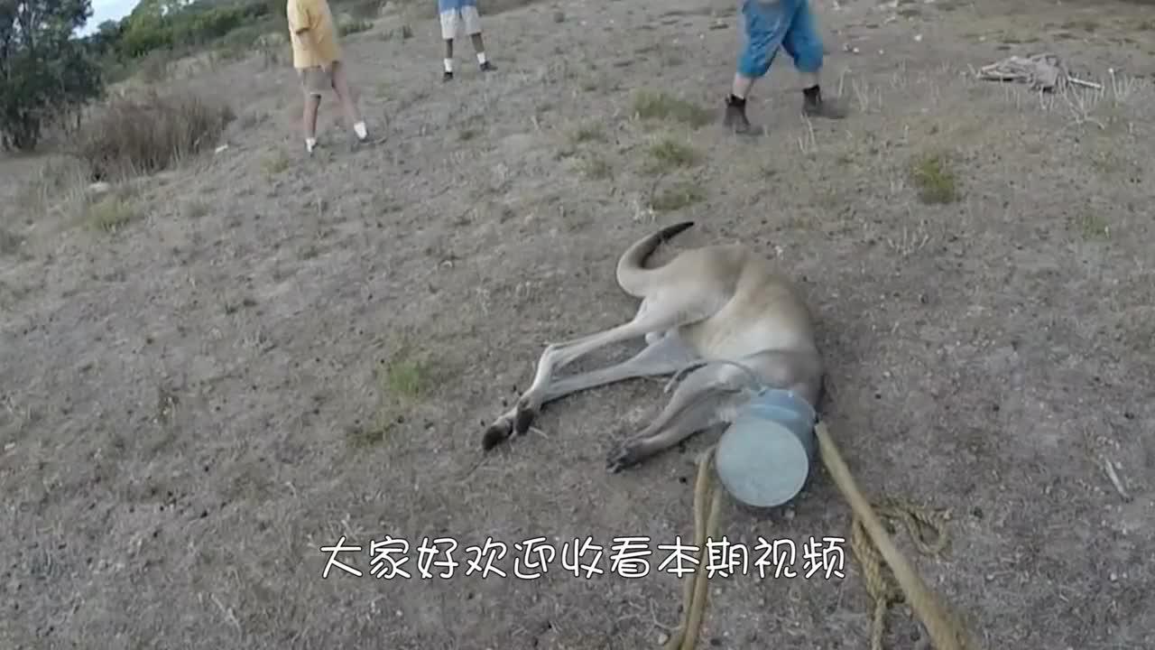 流浪狗头戴塑料管多年,将其取下后,却发现意外惊喜!