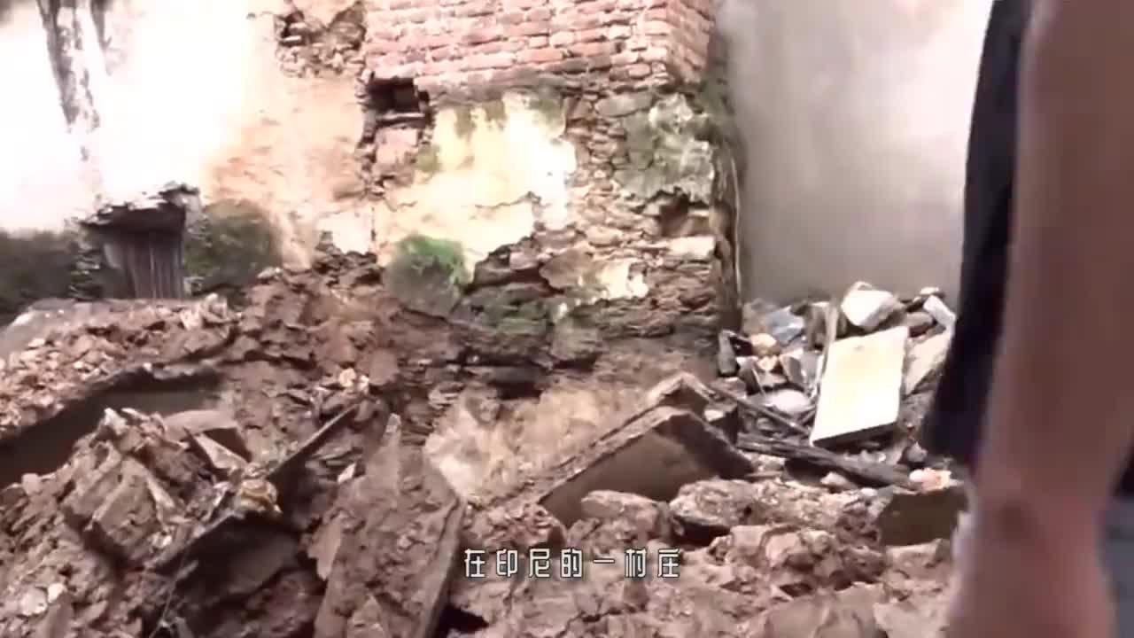 流浪狗疯狂在废墟里挖洞,男子走近一看,眼前的一幕让人触目惊心