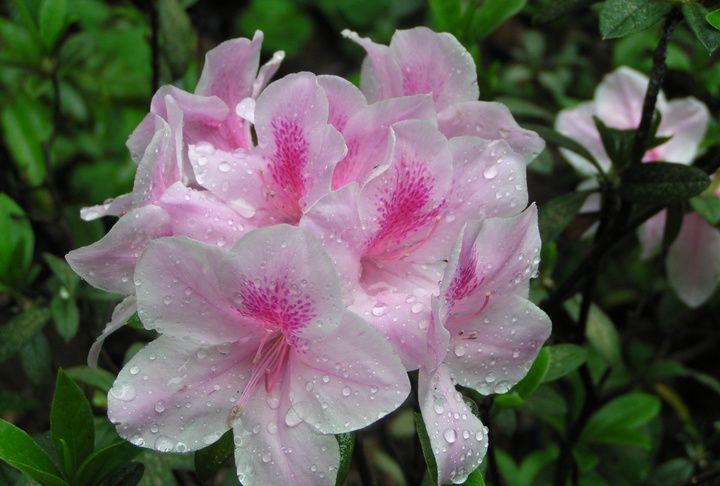 昨日偷闲看花了,今朝多雨奈人何,走进唐人的春雨世界