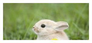 在接下来的一年里,来看看属兔人的运势吧