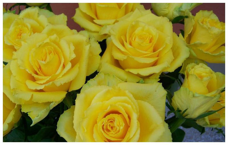1月底桃花环绕,红娘系姻缘,将路遇真命天子,佳偶天成的4星座