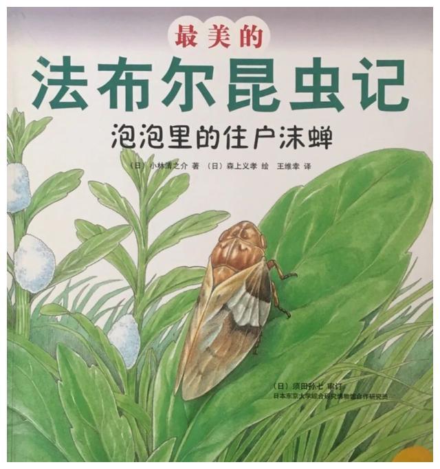 绘本推荐 & 最美的法布尔昆虫记《泡泡里的住户沫蝉》
