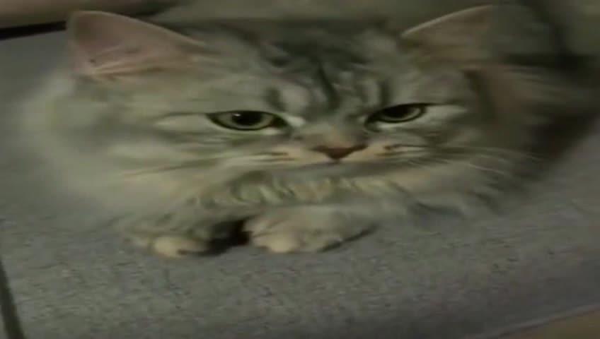 这只猫咪普通话十级,妈妈问什么它都回答的一清二楚,简直成精了
