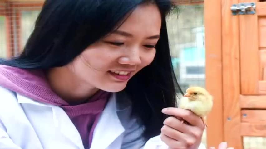 打无公害牌!女留学生返乡创业养土鸡