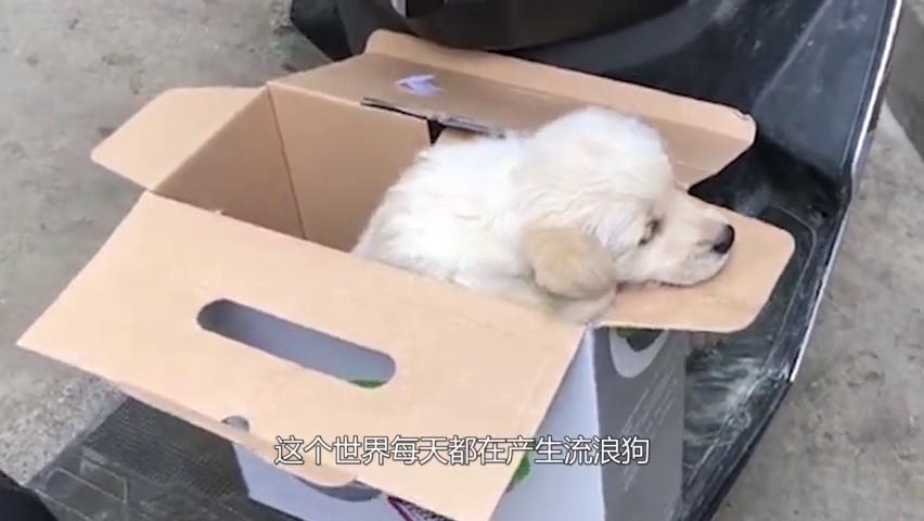 流浪狗头戴塑料管多年,救援切开管子发现惊喜,镜头记录下全过程
