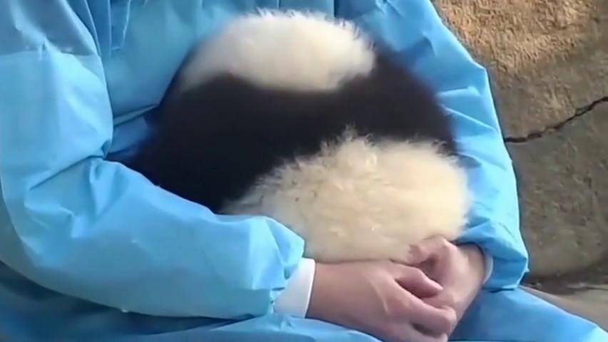 每天都是抱着熊猫宝宝睡觉,而且它还冲你撒娇,像个小宝贝似的!