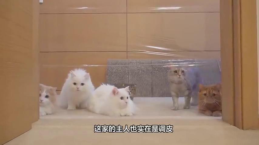主人在门上贴了一层保鲜膜,猫咪的反应太搞笑了,下一秒请不要笑