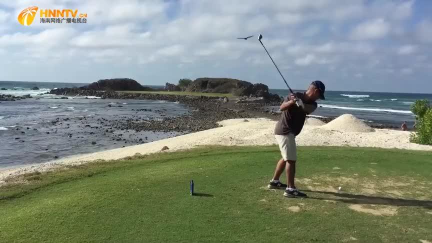 高尔夫球飞出的瞬间,碰巧鸟儿从天而降,真是飞来横祸!