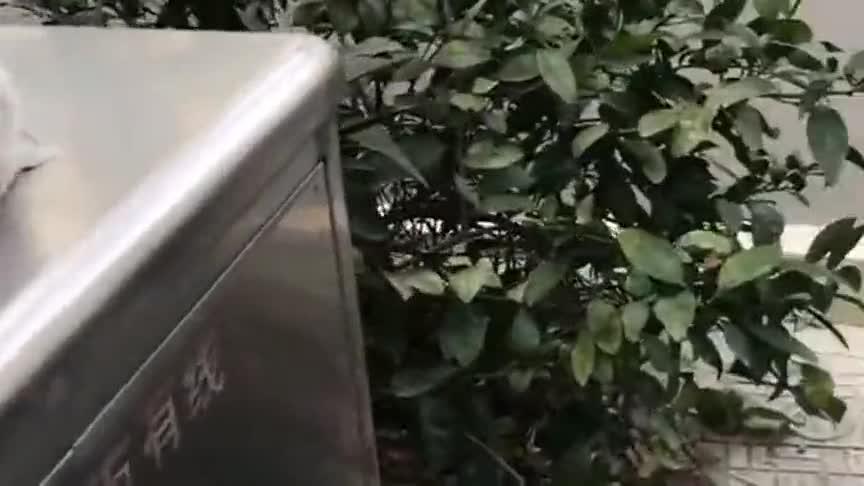 猫咪在垃圾桶上睡着了,我拿着食物试一下,看看它是不是戏耍我!