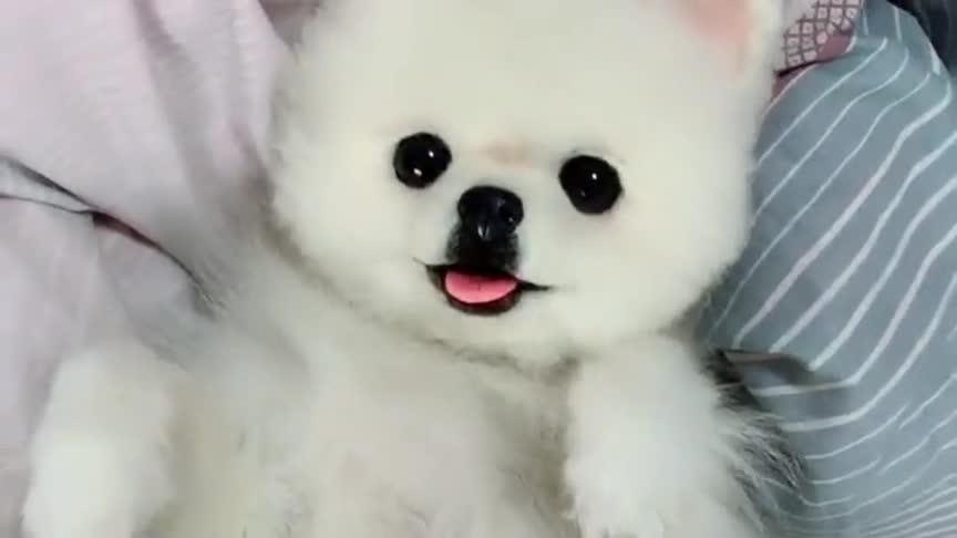 现在这年头狗都不敢素颜上镜了,美颜功能真的是太强大了!