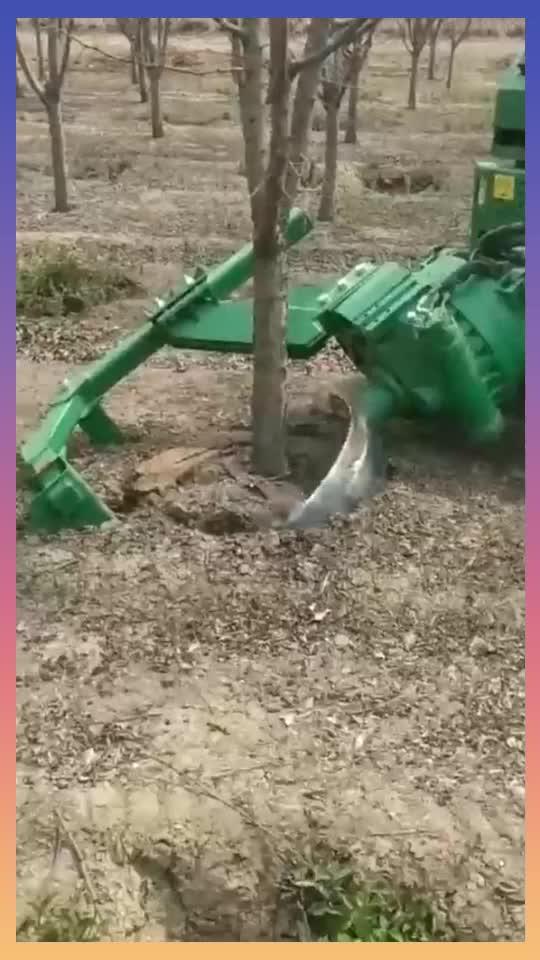 此神器一出这树的成活率肯定能大大的提高