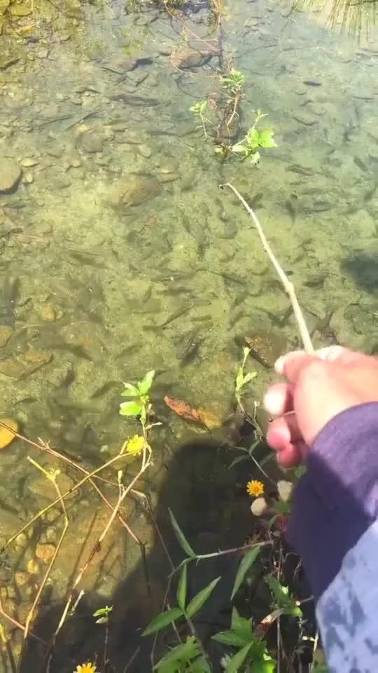 一个星期没吃的鱼一杆子下去真正的愿者上钩来了
