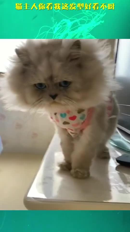 猫主人你看我这发型好看不呀
