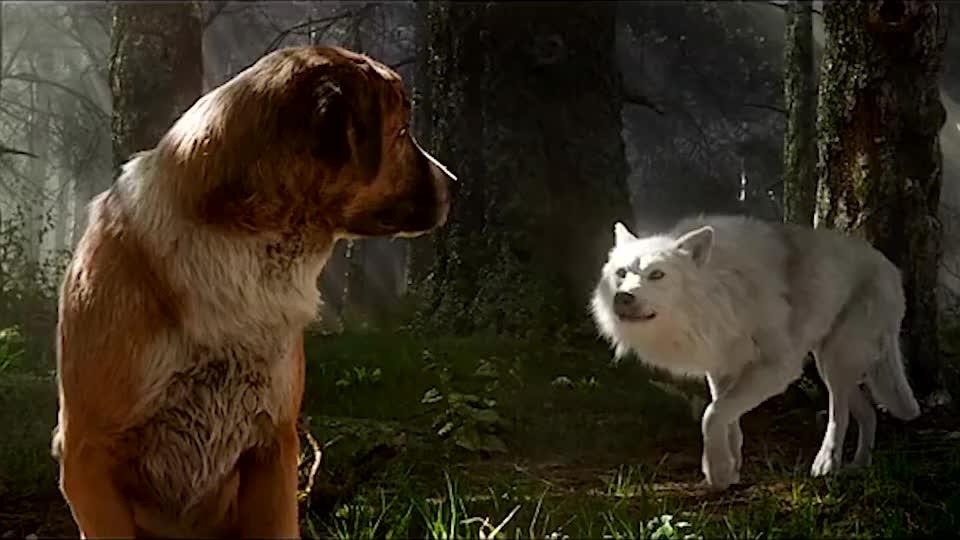 巴克迎娶白富美,从此走上狗生巅峰,再也不是单身狗了!