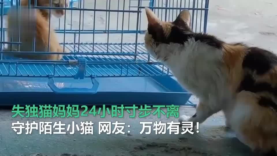 失独猫妈妈24小时寸步不离守护陌生小猫 网友:万物有灵!
