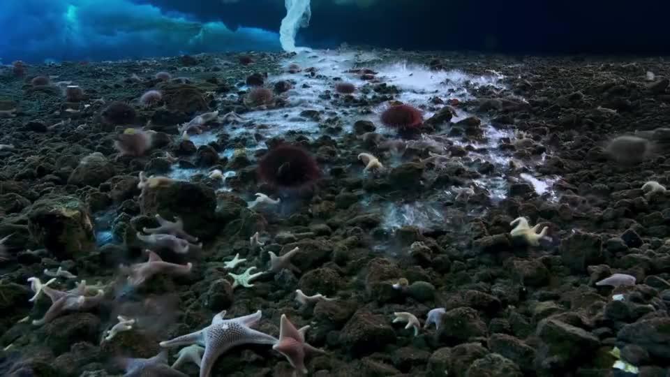 """海洋里的""""死亡冰柱"""",从海面直入海底,所到之处无一生还!"""