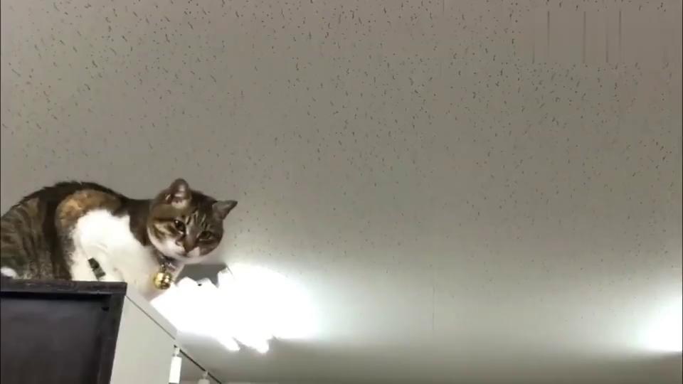 萌宠:隔空撸猫,看看这只猫咪有什么有趣的回应?
