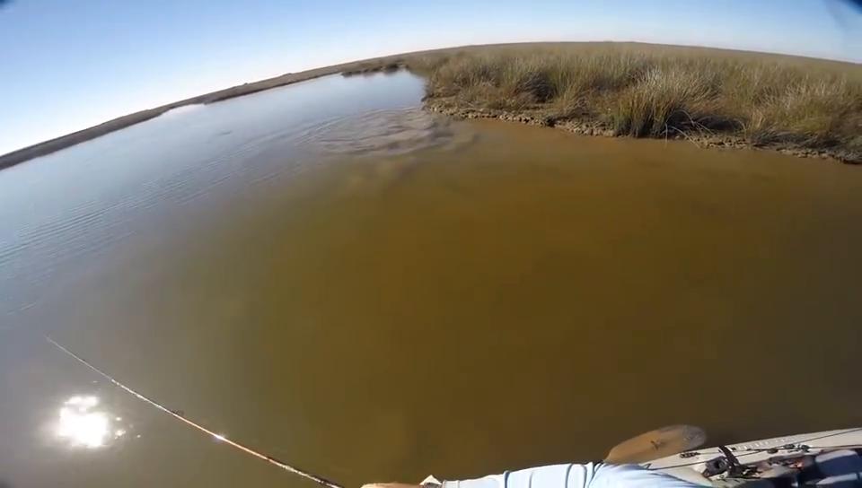 钓鱼沼泽地里水很浅,能够看到鱼在游动