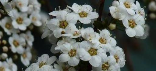 这5款小花栽在院子,丁香花开,芳香四溢,让庭院变成小花园