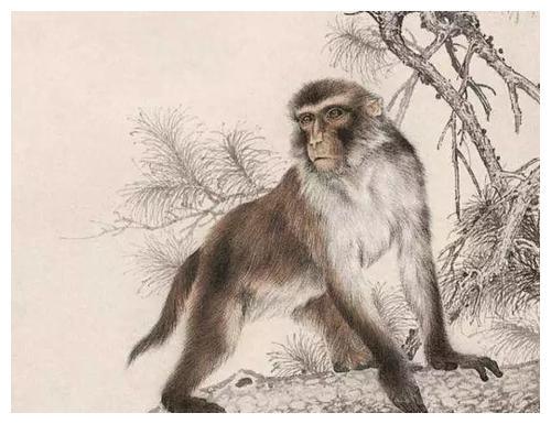 三生肖猴猪马,十二月初,运势好,财源滚滚