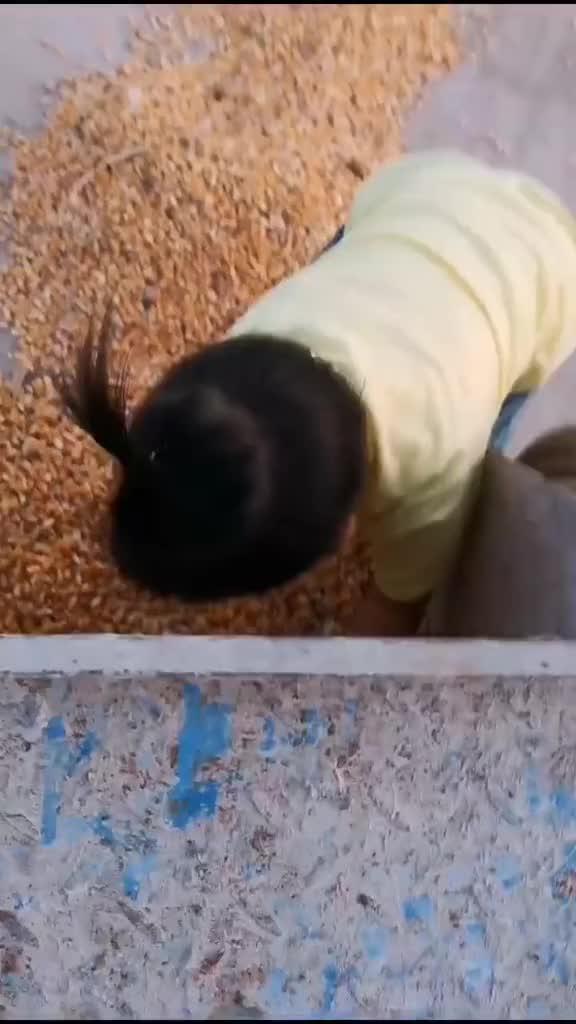 放学回来还得帮忙收玉米,累了休息会,结果……哈哈萌娃育儿