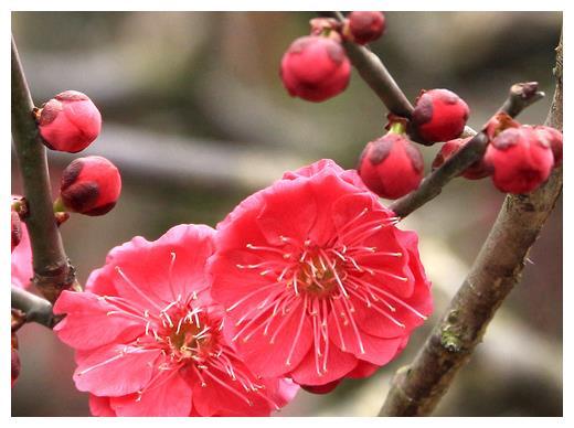 2月份开始,4属相鸿运当头,贵人相助,家庭和睦,生活幸福