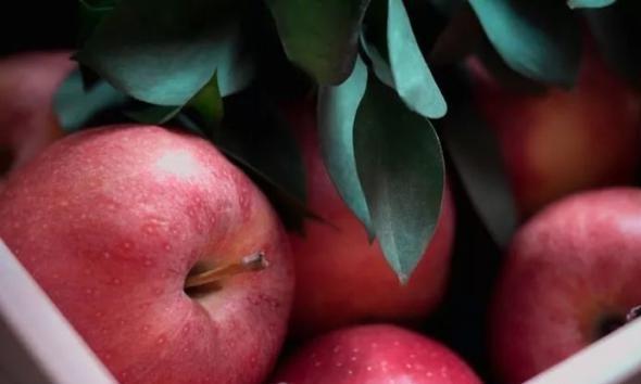 葵燕麦苹果马芬,烘烤小白也可以使用