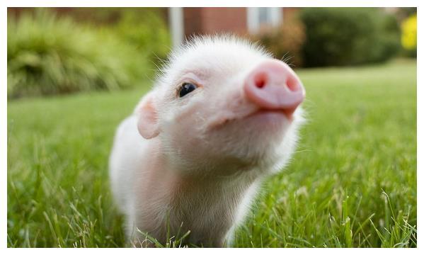 生肖猪12月5号大喜临头,躲不开的喜,属猪人花一分钟看看什么喜