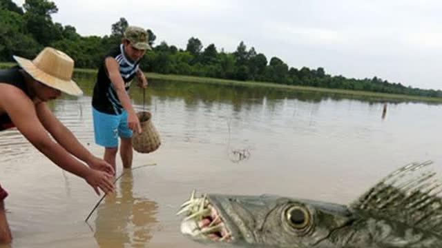 农村小伙捕鱼为生,抓到条藏在水中的罕见大鲶鱼,轻松日赚数百