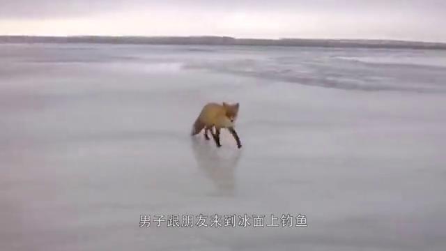 战士巡逻时救下一只白狐,从此白狐与战士一起守边防,太感人了