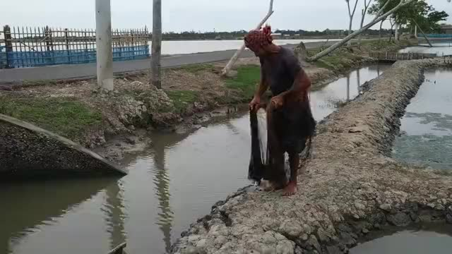 大叔水渠边捕鱼捕虾,连撒几网,看看他捕获了多少